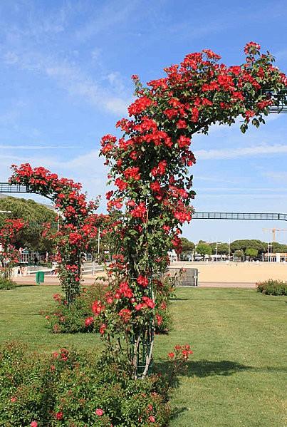 les jardins du front de mer de Royan -4-