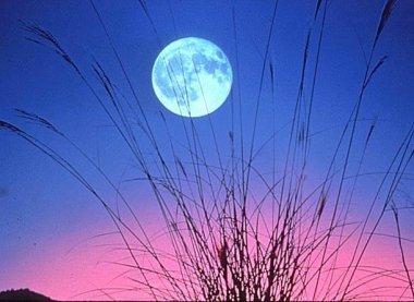 Idée reçue n°9 : il y a plus d'accouchements les soirs de pleine lune