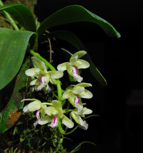 Orchidées de février ( 2/2 )