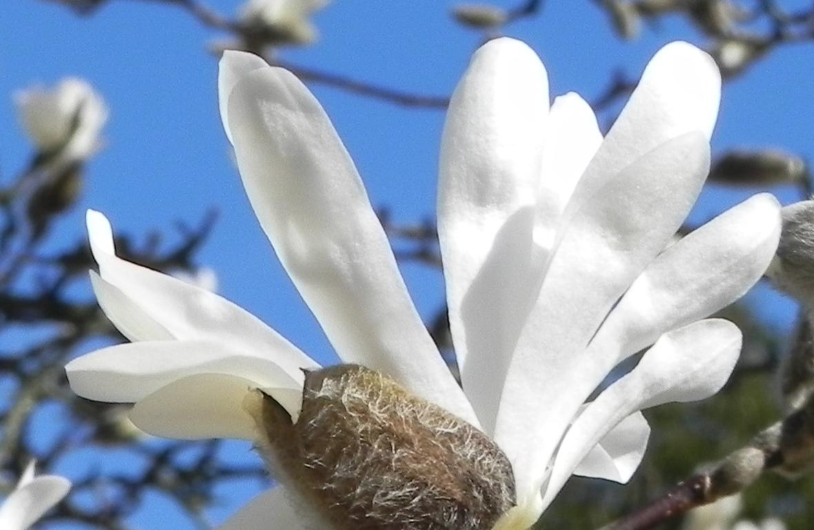 des fleurs en macro-photos