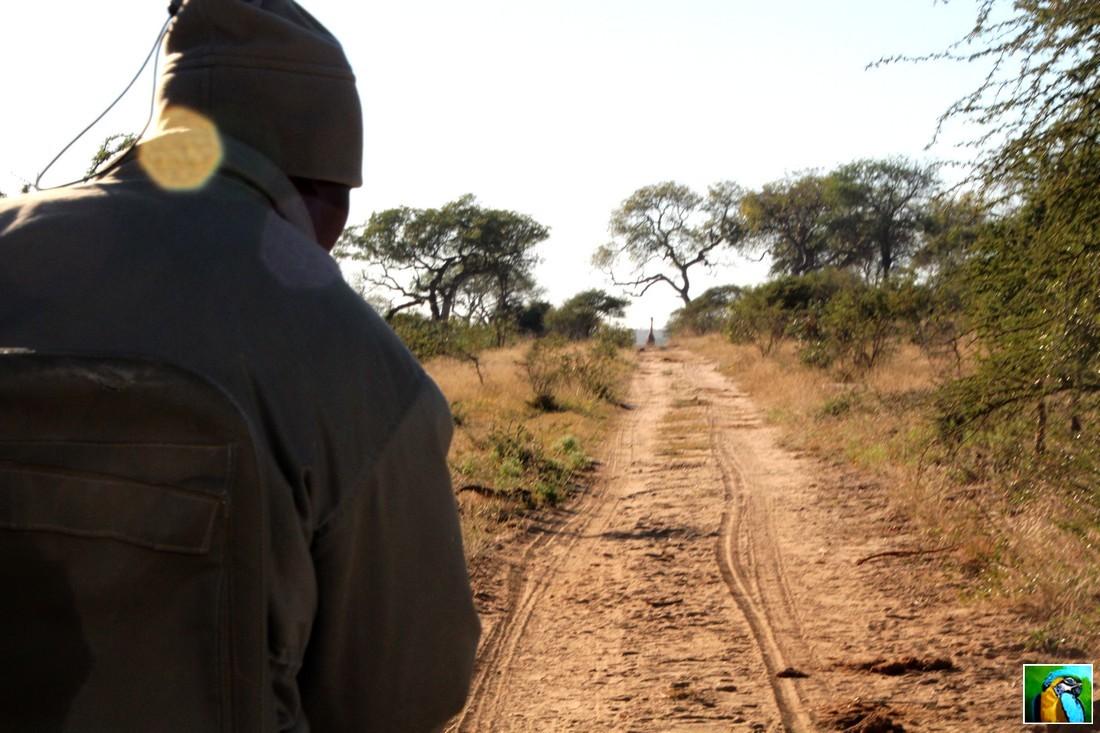 AFRIQUE du SUD : juin 2018: 3ème safari 2/2