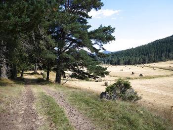 Le chemin en rive gauche du vallon