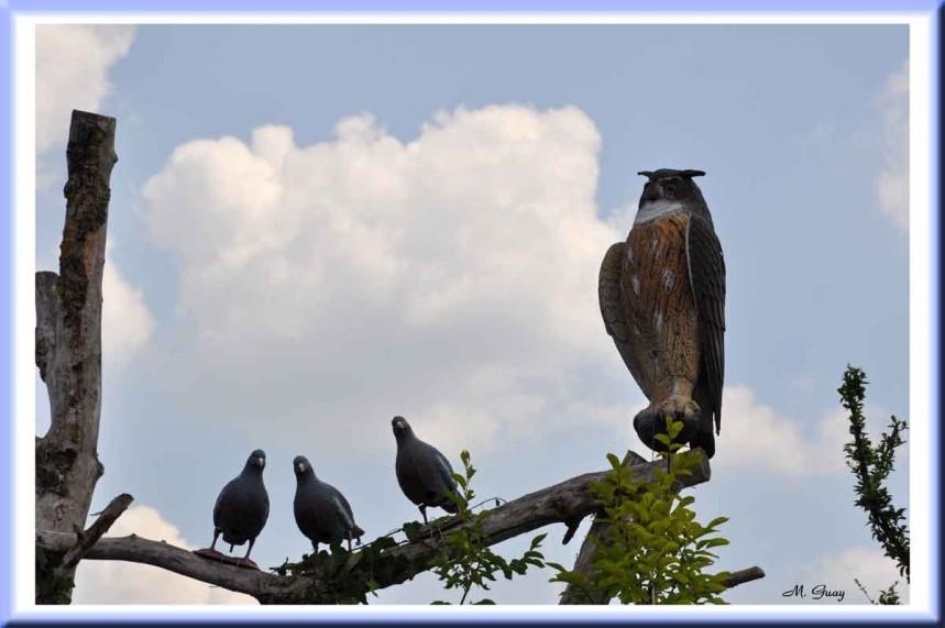 oiseaux-fable-2036.jpg