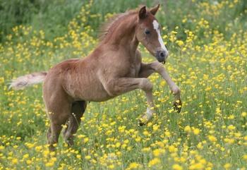 Delicatessen Eoz Foal (6)