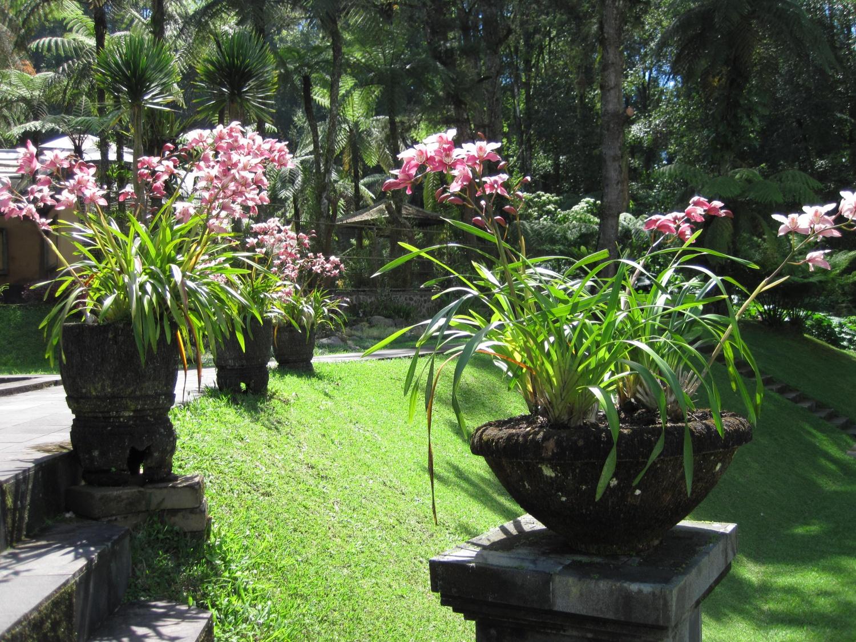 Jardin botanique de bali sable mouvant for Les jardins de bali