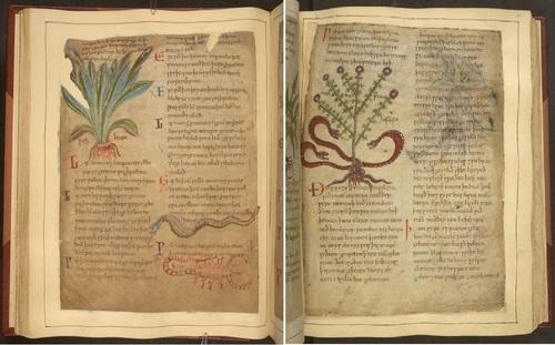 Une encyclopédie de phytothérapie du IXe siècle mise en ligne par la Bristish Library