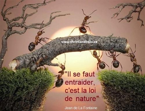 Il faudra s'entraider, les fourmis nous le montrent