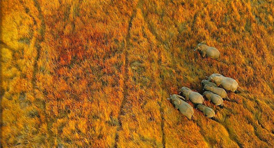 DE-645737-elephants-okavango.jpg