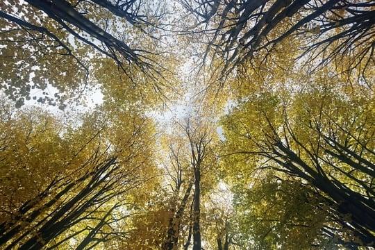 Equinoxe d'automne: date, explications sur l'équinoxe et les feuilles mortes