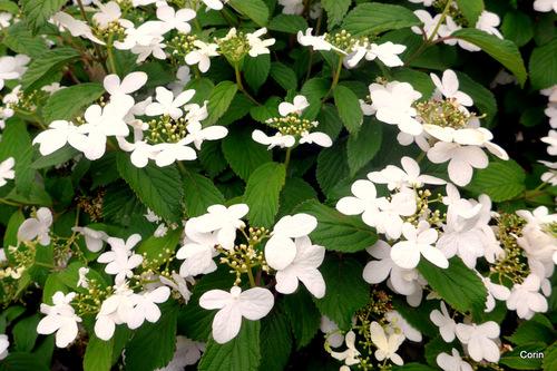 Fleurs blanches ...