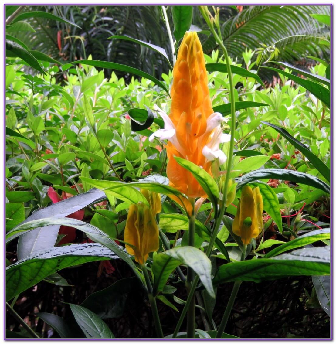 Les fleures du pritemps Malgache