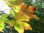 Elle arrive: l' automne...!!!