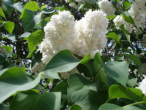 jardin-006.JPG