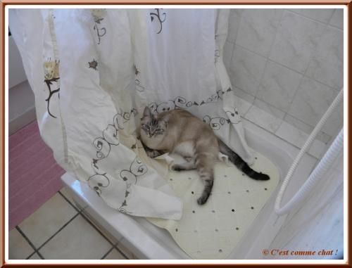 Dans le bac à douche