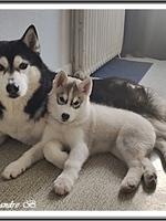 Kira (2,5 mois) et son copain Loki