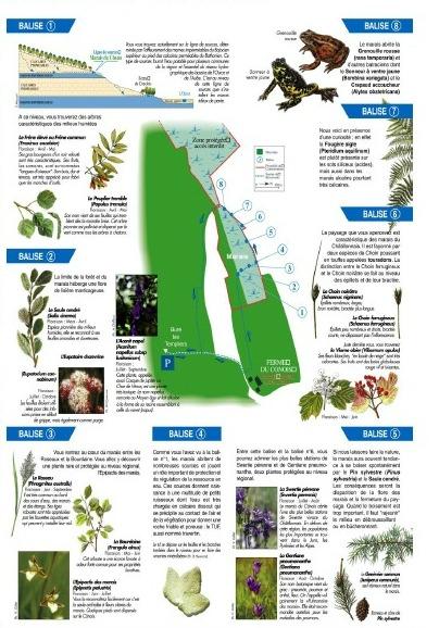 Le marais tufeux du Cônois....