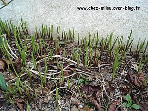 jardin mars 201014