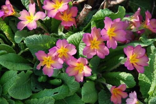Nos plus belles fleurs...