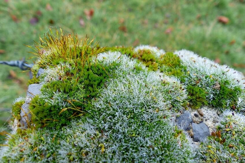 Mousse et lichen des merveilles de dame Nature