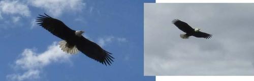 28 juin réserve animalière