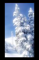 *** 168.La neige est arrivée ***