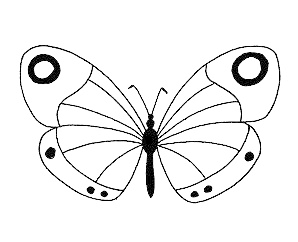papillon-blanc.jpg