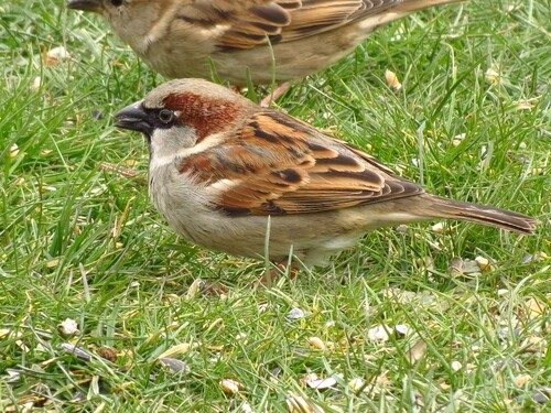 Oiseaux de mon jardin