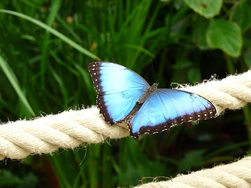 Le jardin aux papillons (suite)