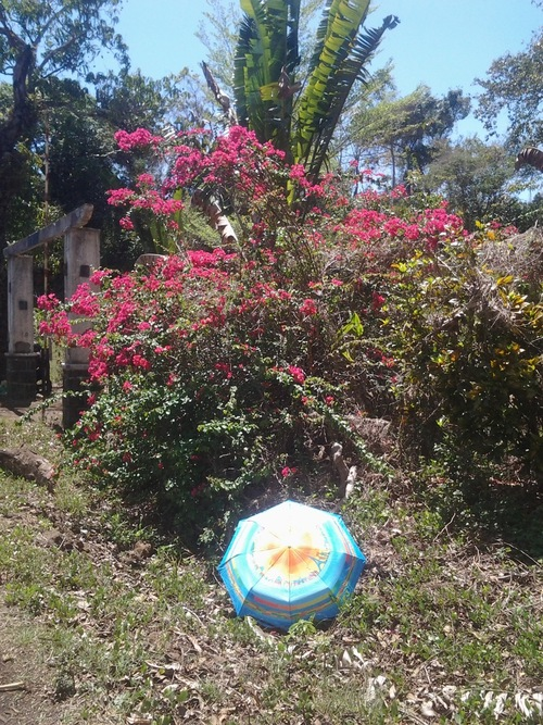 Végétation à Madagascar