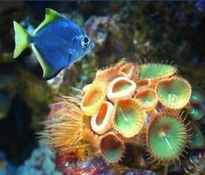 http://lancien.cowblog.fr/images/Image4/A1.jpg
