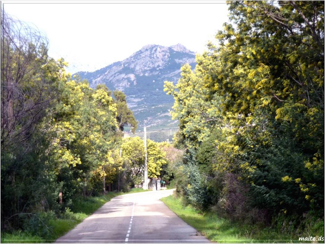 La route fleurie