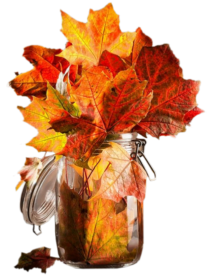 c'est toujours l'automne !