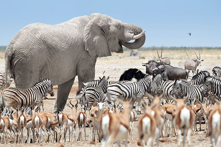 Les sites incontournables en Namibie - Fantastic Africa