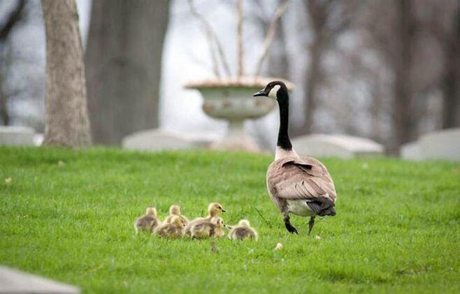animal parents17 Funny: Animal parents