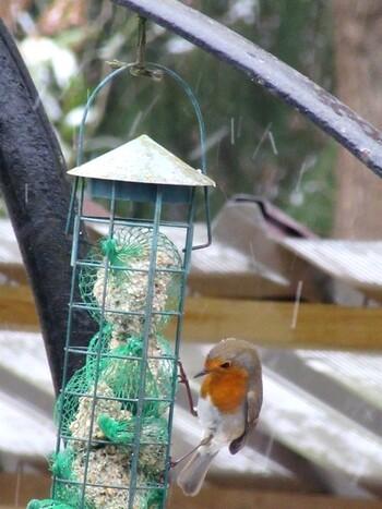 Les oiseaux sous la neige
