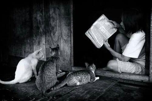 10 - Des chats, des enfants et des livres