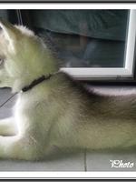Niklaus (2,5 mois)