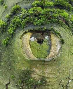 Voici : L'œil de arbre coupé