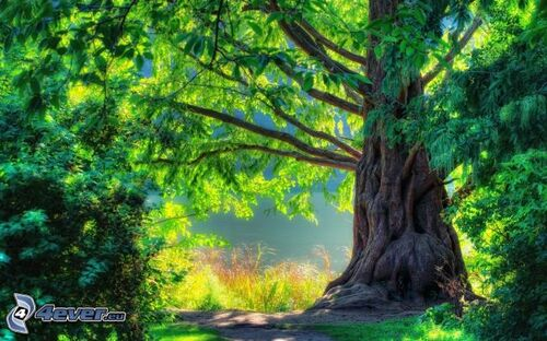 SAGESSE DESCONTES : Le grand arbre
