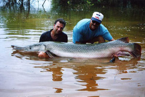 poisson alligator gar