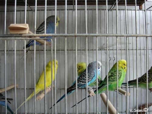 marché aux oiseaux 鳥市場