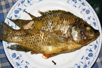 tilapia steamfish thaï 12 10