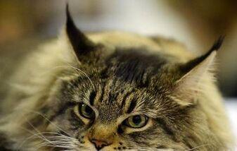 Un garçon âgé de deux à trois mois a été abandonné samedi dans le carton servant d'abri provisoire au chat Macha