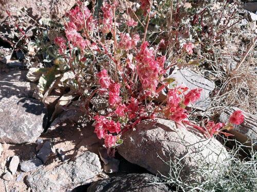 De petites fleurs dans la montée