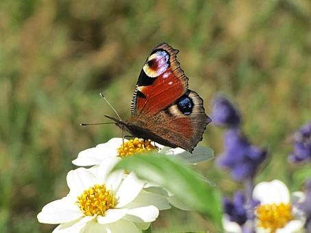 les-papillons-7649.JPG