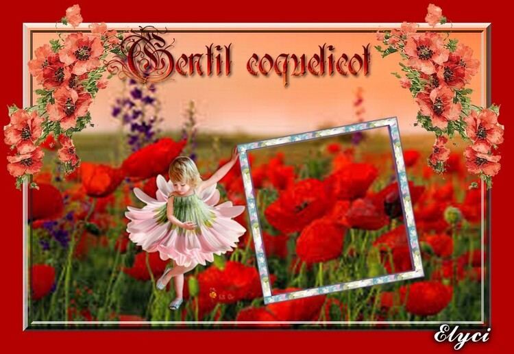 creation coquelicot