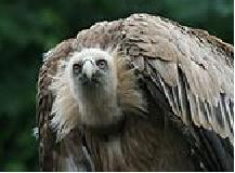 au pays des vautours