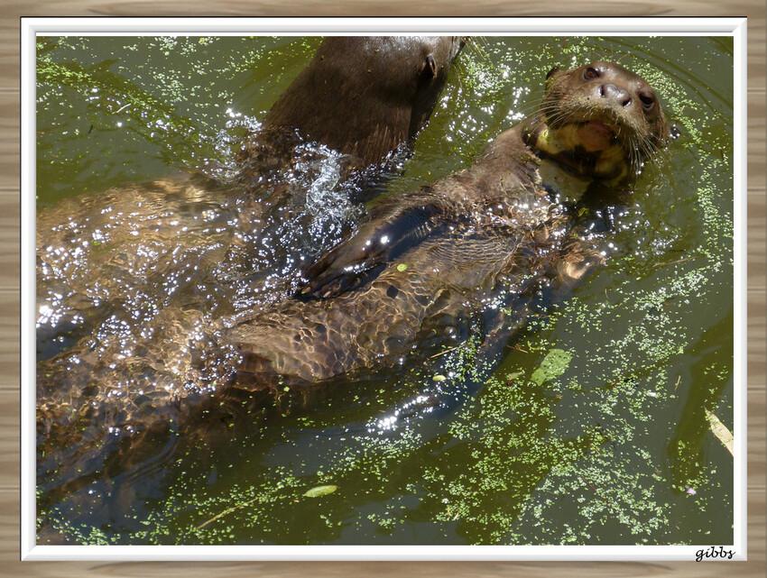 zoo de doué la fontaine serie 3