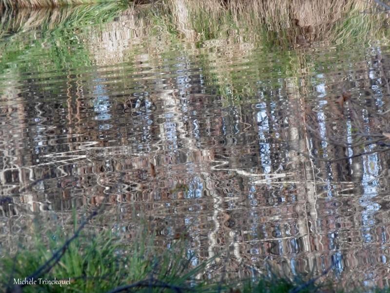 """Une balade au bord de """"mon"""" Lac, le 5 décembre (suite)..."""