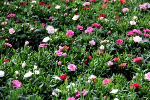 C'est le printemps à Famiflora (1/7)